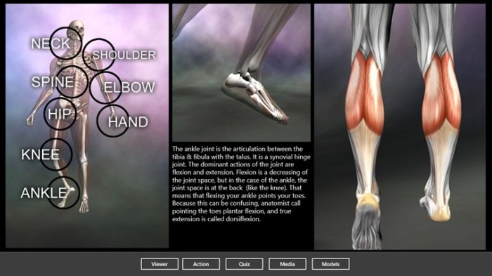 Muscle and Bone Anatomy 3D in Windows Store
